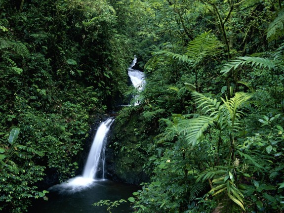 Cloud Forests – Costa Rica