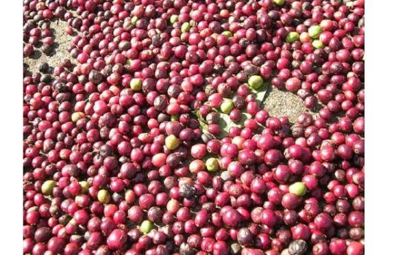 Uganda Bugisi Organic Coffee Beans