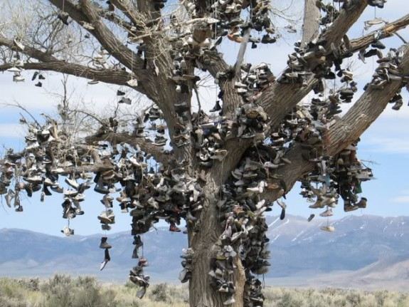 Shoe Tree, Nevada